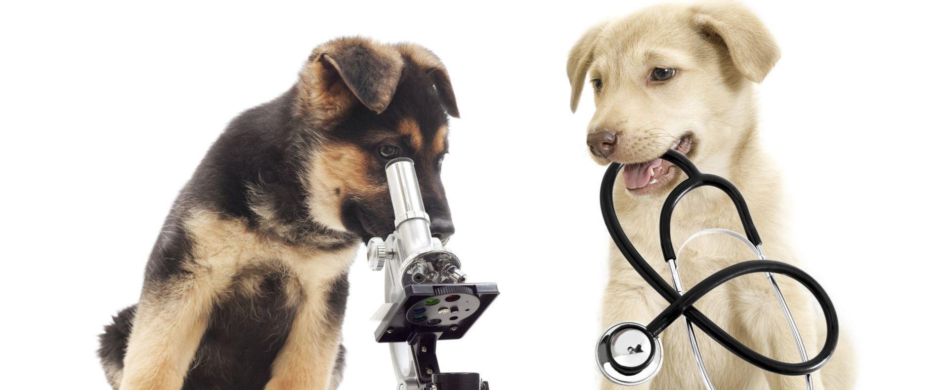 Leistungen Tierarzt Bocholt