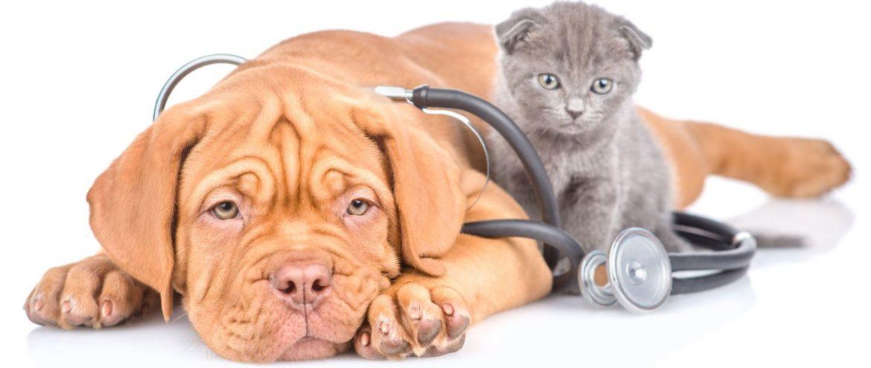 Tierarzt Bocholt